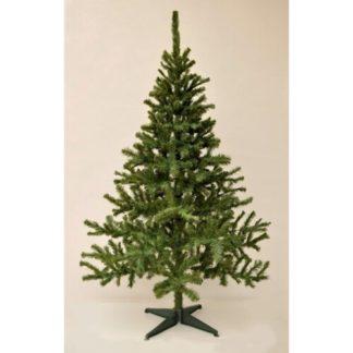 - Vánoční stromek Smrk kanadský
