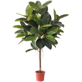- Umělý strom Ficus elastica