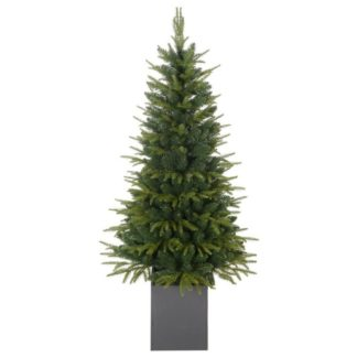 - Vánoční stromek Smrk